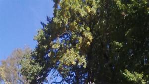 Летом в парке много зелени