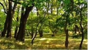 Ставрополь и его лесные массивы